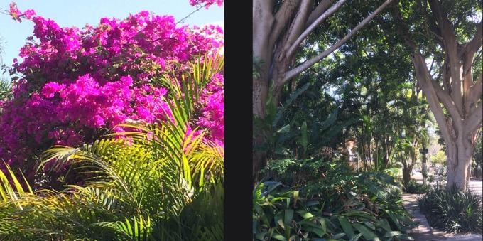 o-arborizado-do-jardim-paulista