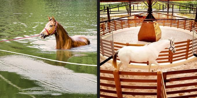 Cavalos no Haras Larissa